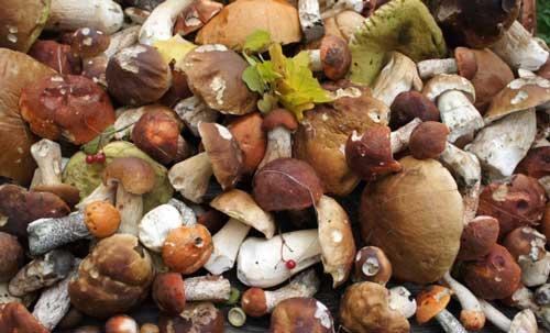 Изобилие грибов поражает наших туристов