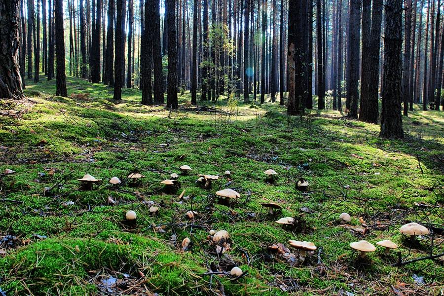 Излюбленное место русских грибников – Северная Карелия