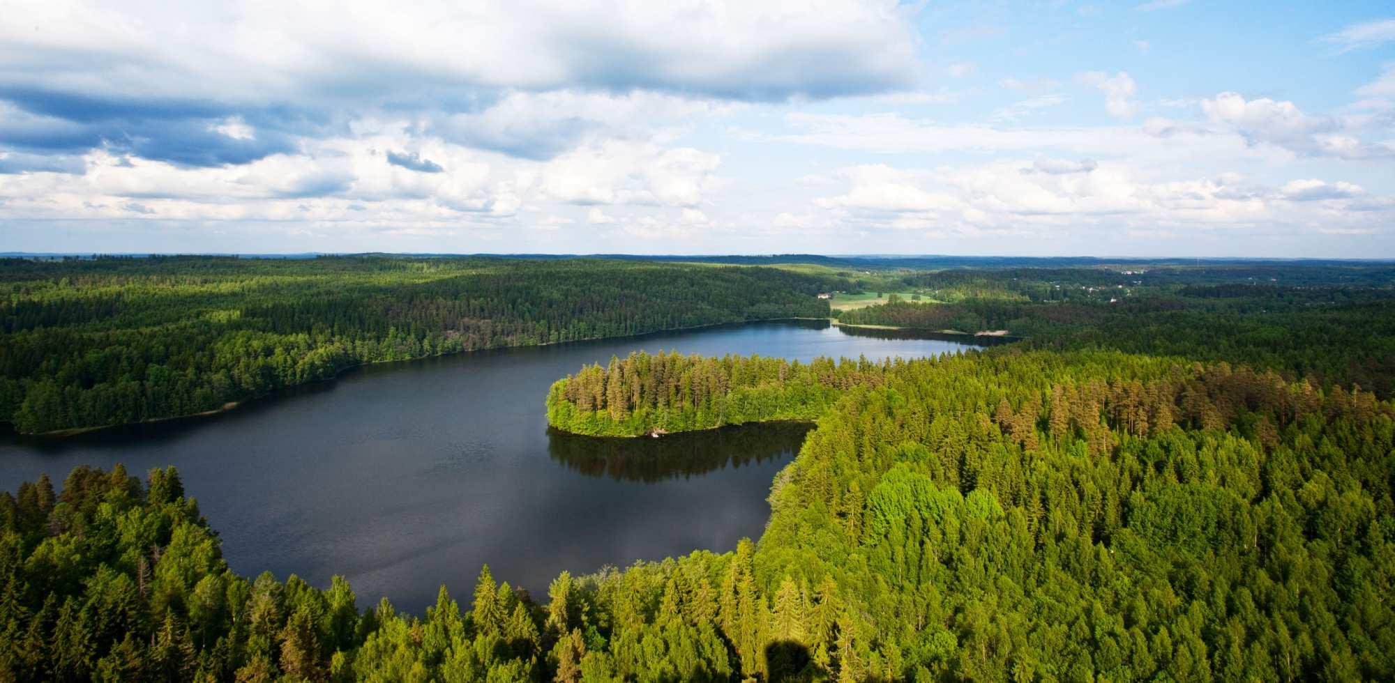 Леса Финляндии