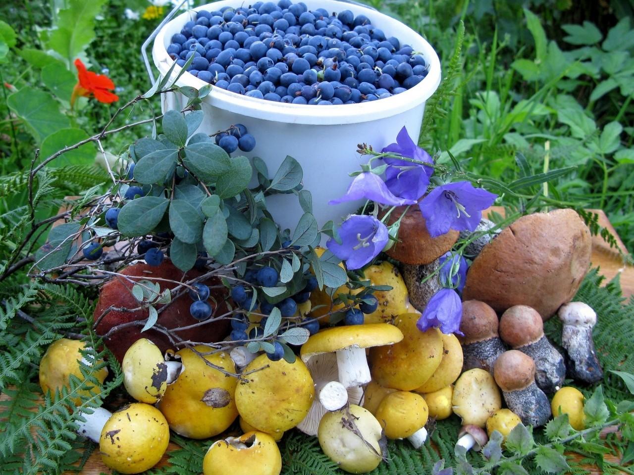 Картинки с осенними дарами грибы ягоды орешки