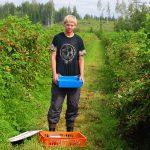 Как устроиться сборщиком ягод в Финляндии