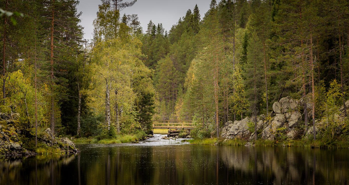 Зеленое золото Финляндии