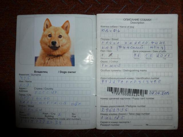 паспорт домашних животных