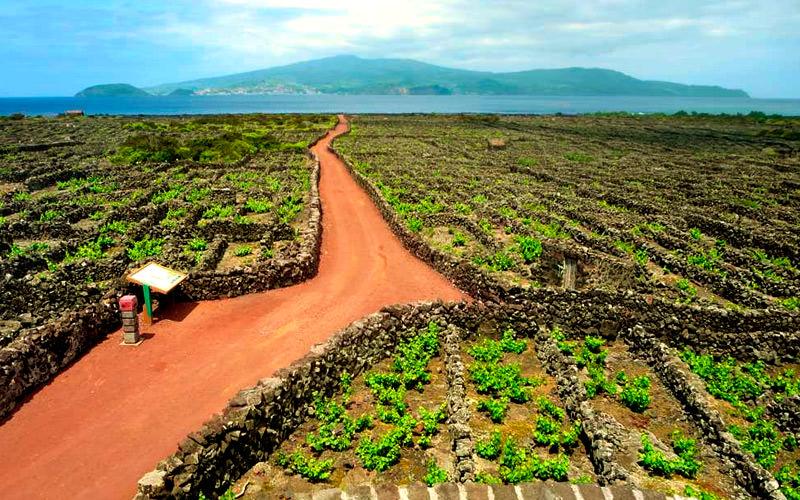 виноградники Аландских островов