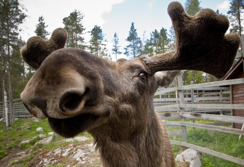 Зоопарки в Финляндии