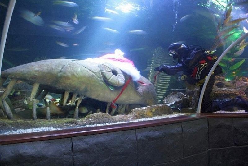 Что посмотреть в океанариуме