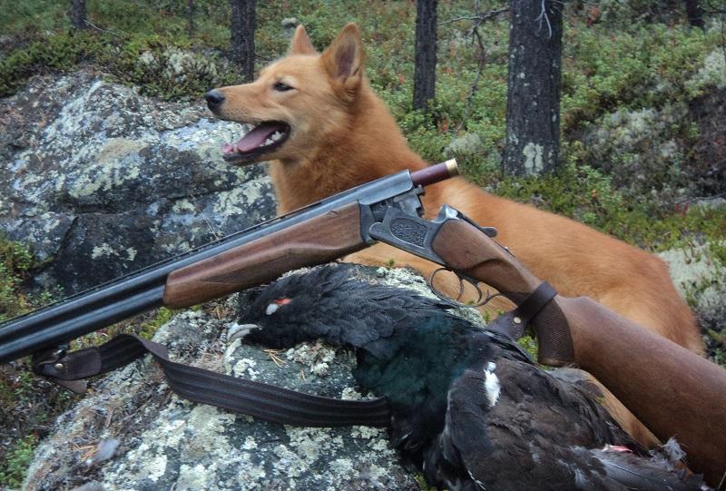 Охота в Финляндии