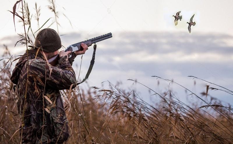 Охота на птиц в Финляндии
