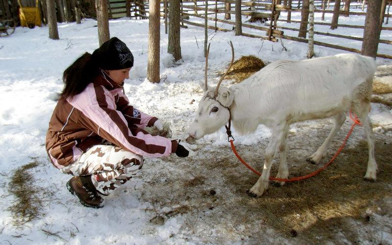 Посещение финской оленьей фермы