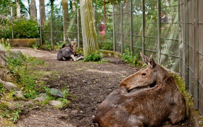 Зоопарк в Хельсинки